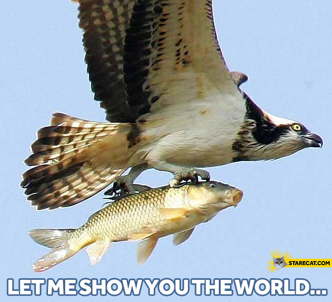Fish bird let me show you the world