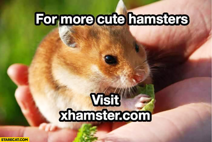 For more cute hamsters visit xhamster com