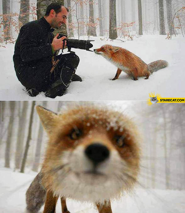 Fox close picture sniffing camera