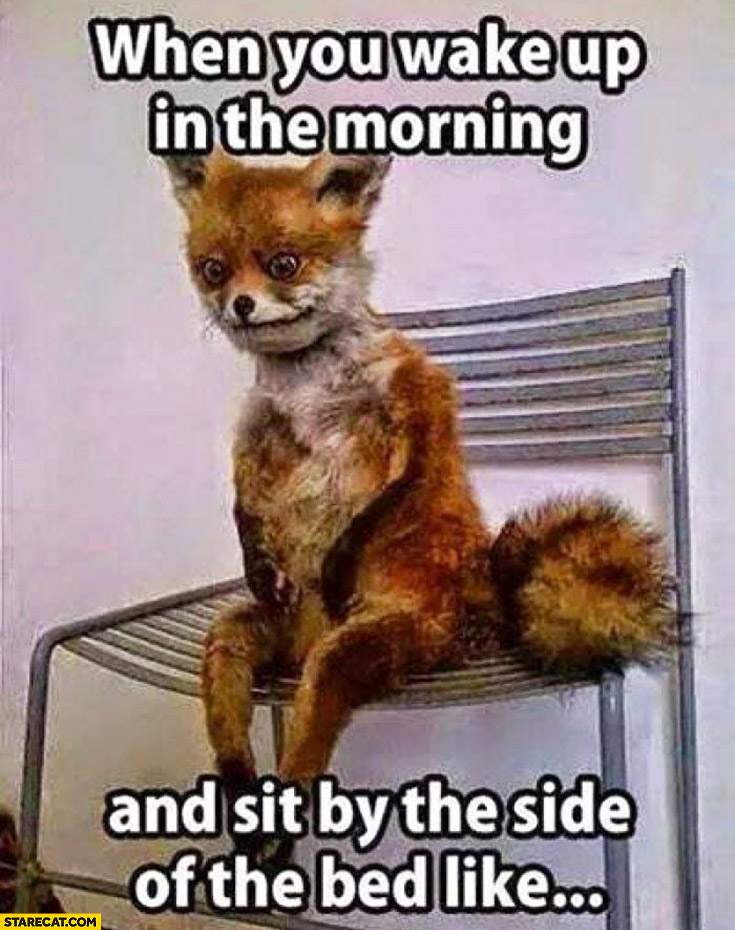 Fox when you wake up in the morning and sit by the side of the bed like