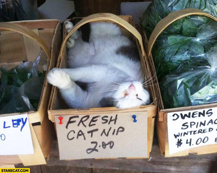 Fresh catnip drunk cat in a box