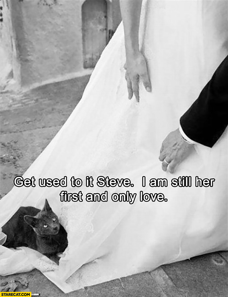 Get used to it Steve. I am still her first and only love. Cat on a wedding dress