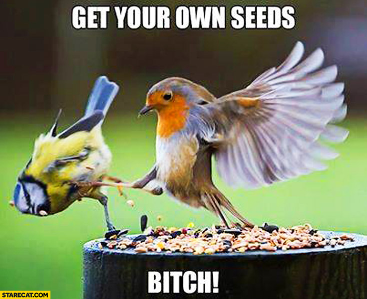 Get your own seeds bird kicking out other bird