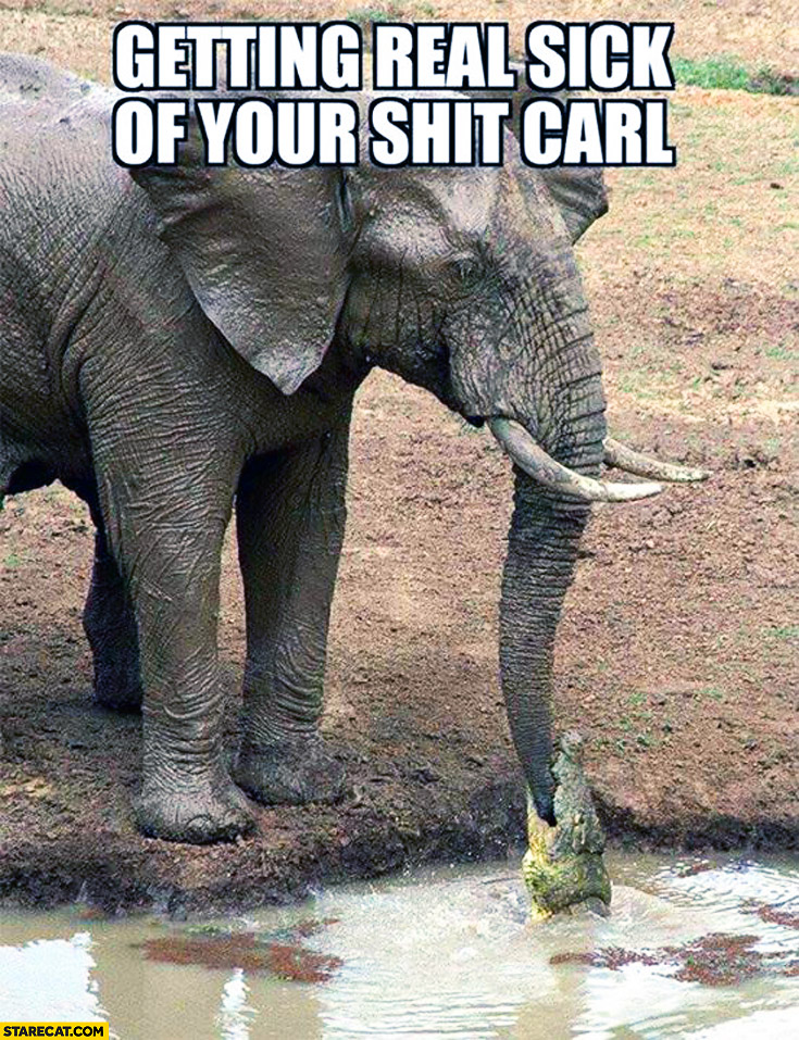 Getting real sick of your shit Carl elephant bitten by a crocodile