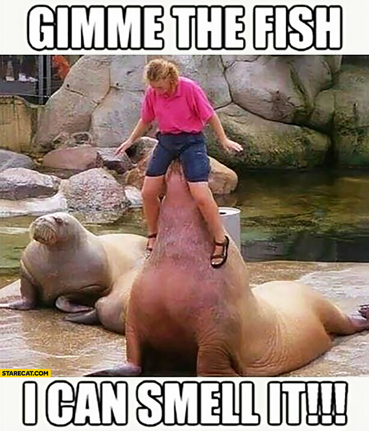 Gimme the fish, I can smell it. Woman sitting on a seal