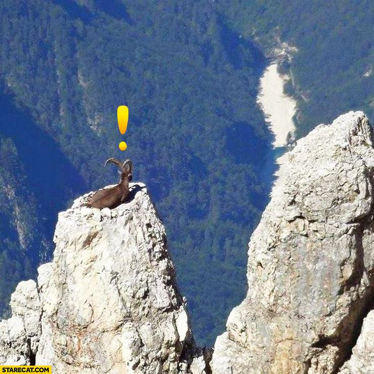 Goat on a high rocks Cretan mountains
