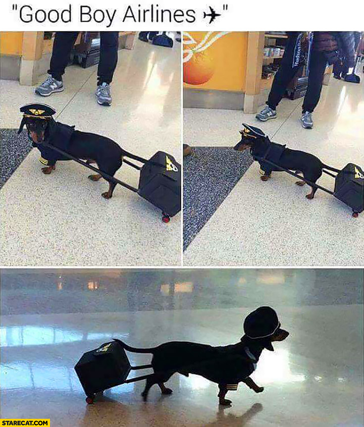 Good boy airlines. Dog wearing airplane pilots suit
