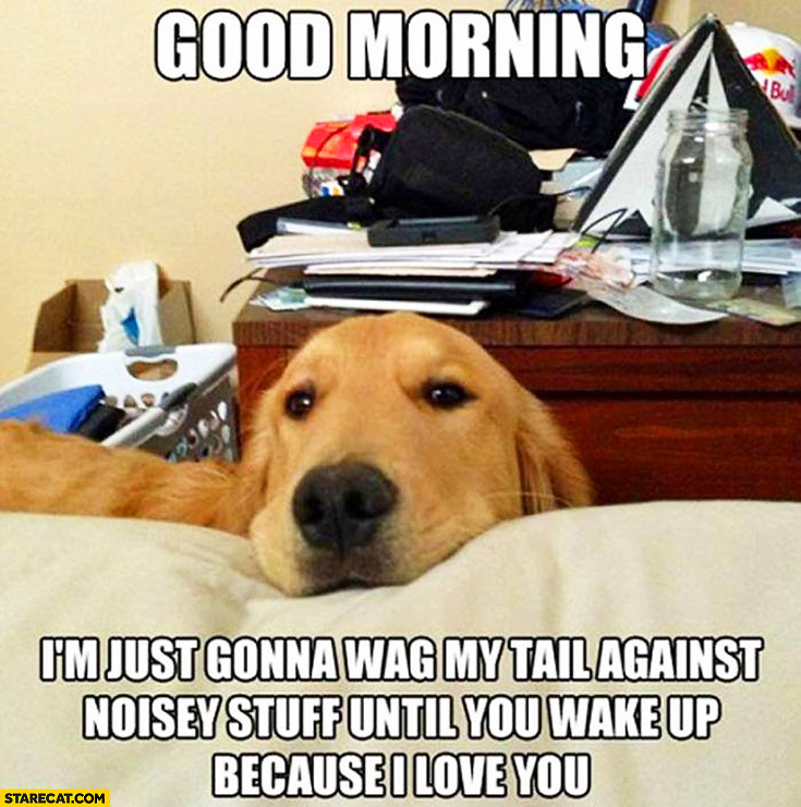 Good morning I'm just gonna wag my tail against noisey stuff until you wake up because I love you dog