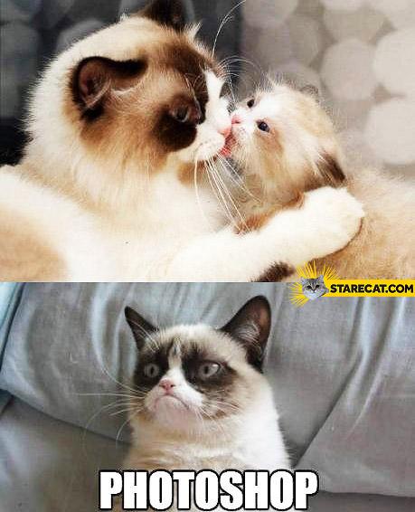Grumpy cat kissing photoshopped