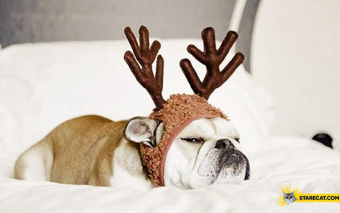 Grumpy dog reindeer