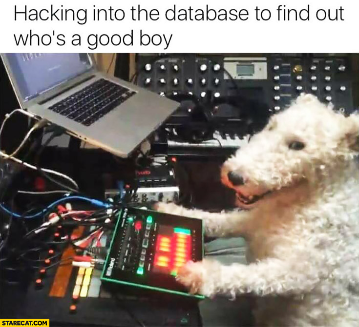 Hacking into the database to find out who's a good boy hacker dog