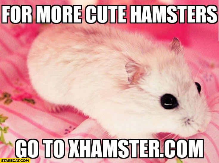 Hamster meme for more cute hamsters go to xhamster.com