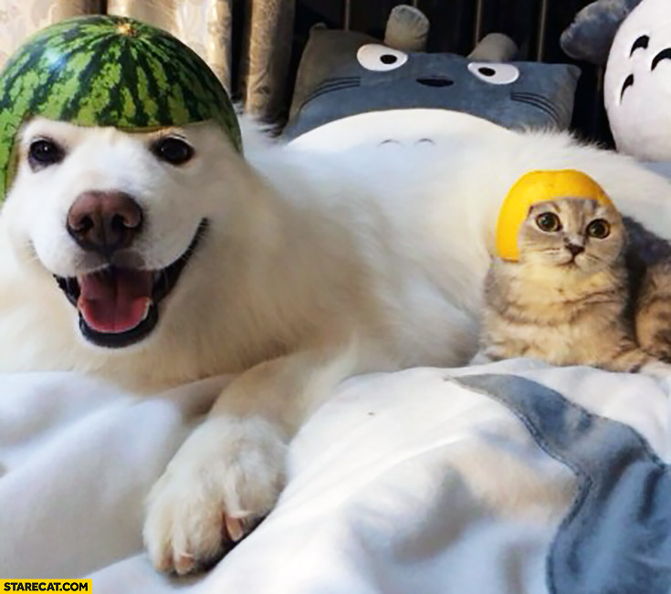 Happy dog with watermelon on his head cat with lemon on his head
