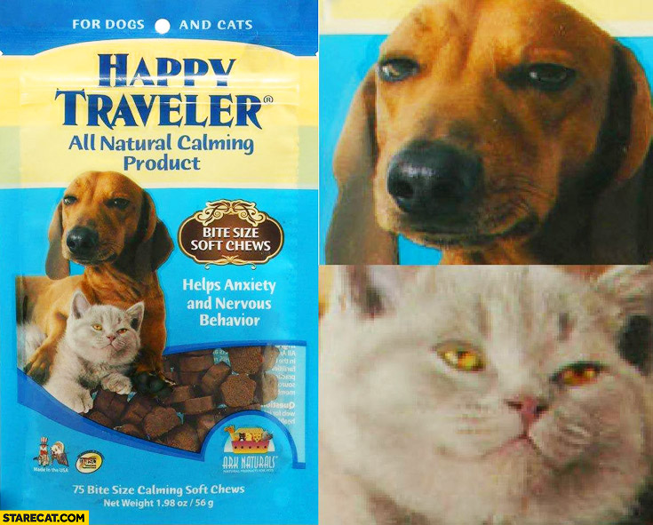 Happy traveler calming product dog cat looking high
