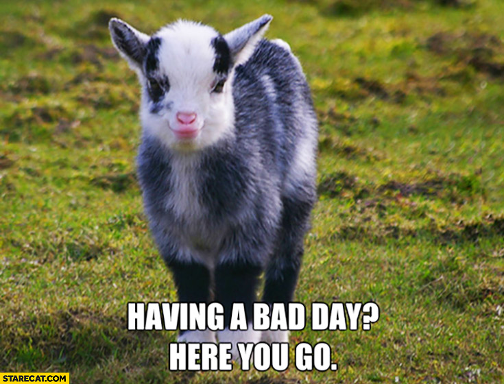 Having A Bad Day Here You Go Cute Baby Goat Starecat Com
