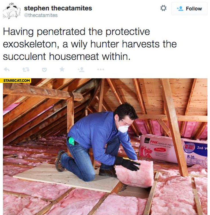 Having penetrated the protective exoskeleton hunter harvests the succulent housemeat within
