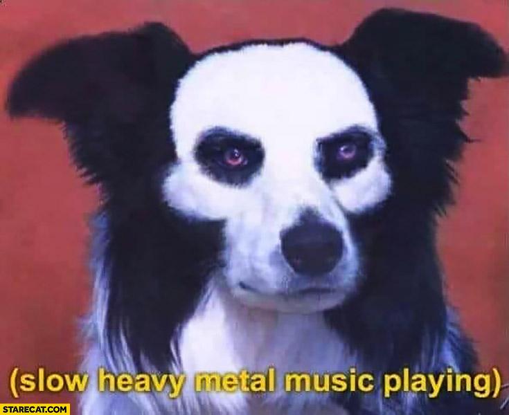 Heavy metal dog slow heavy metal music playing