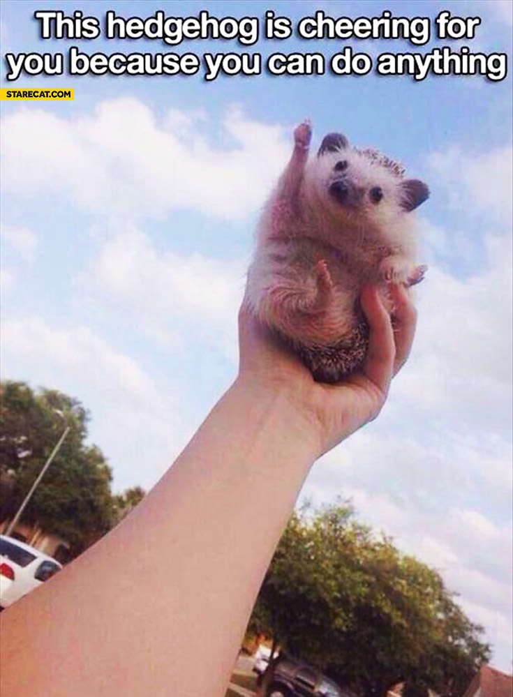 Hedgehod is cheering for you because you can do anything