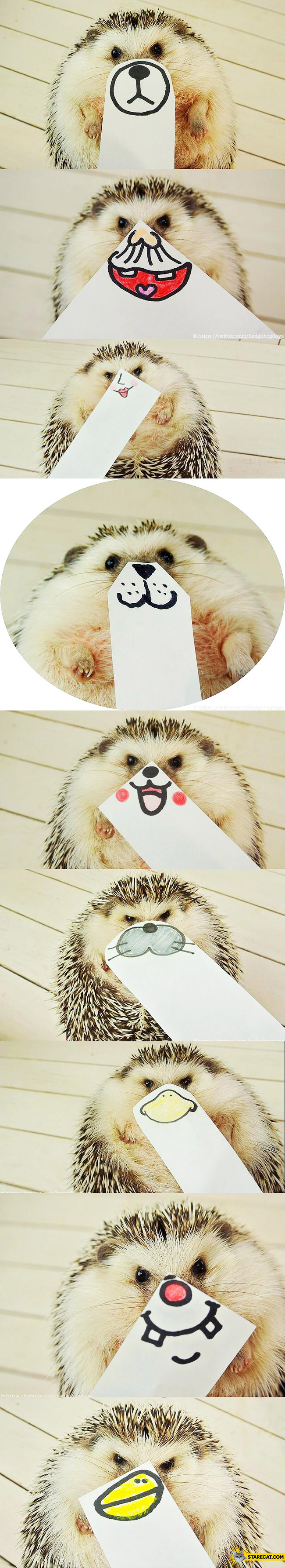 Hedgehog paper faces