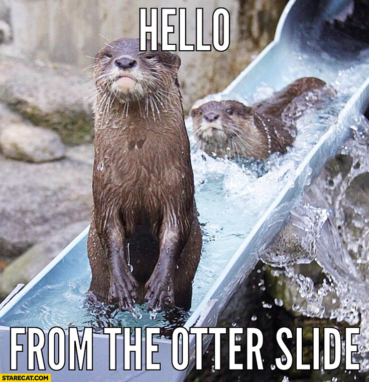 Hello from the other slide otter