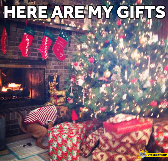 Here are my gifts dog