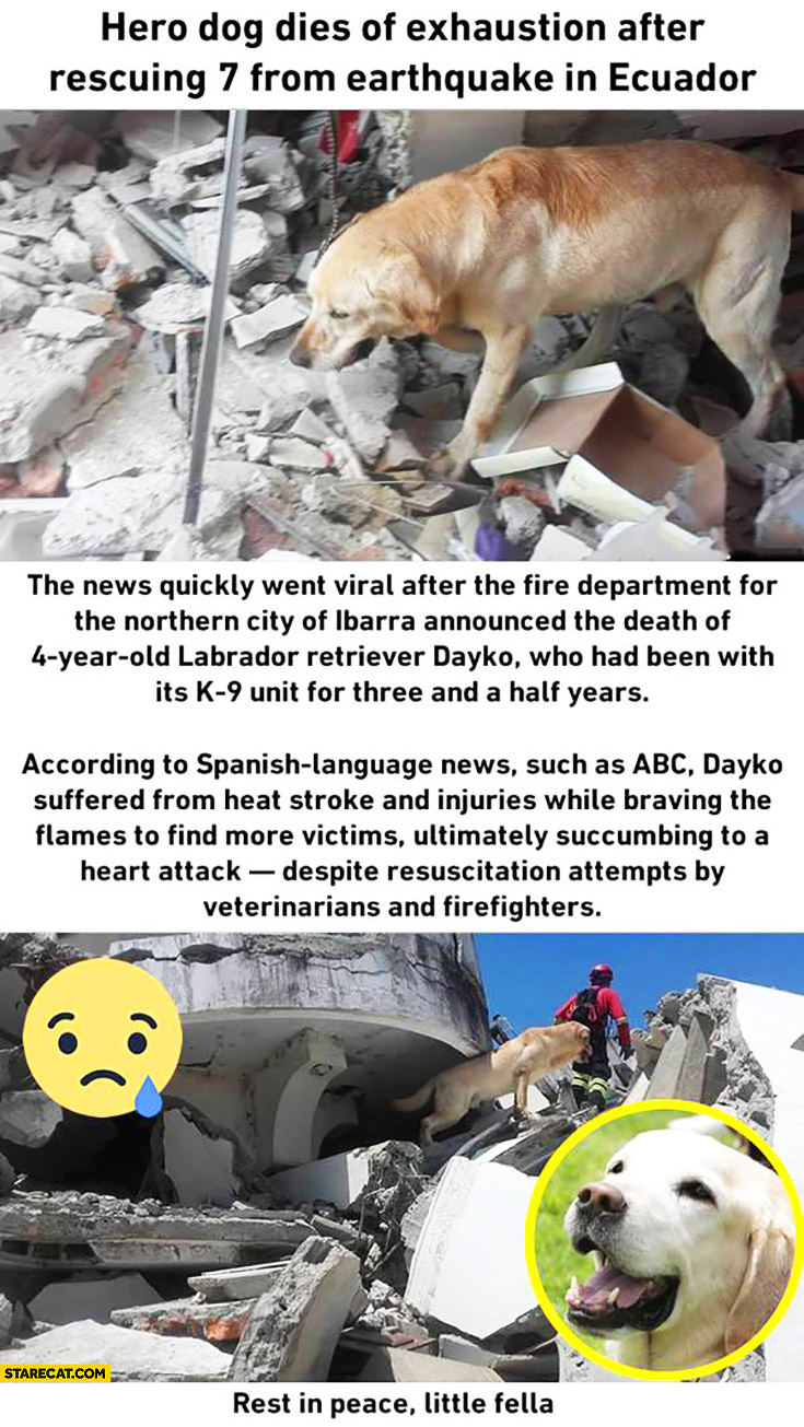 Hero dog dies of exhaustion after rescuing 7 people from earthquake in Ecuador story