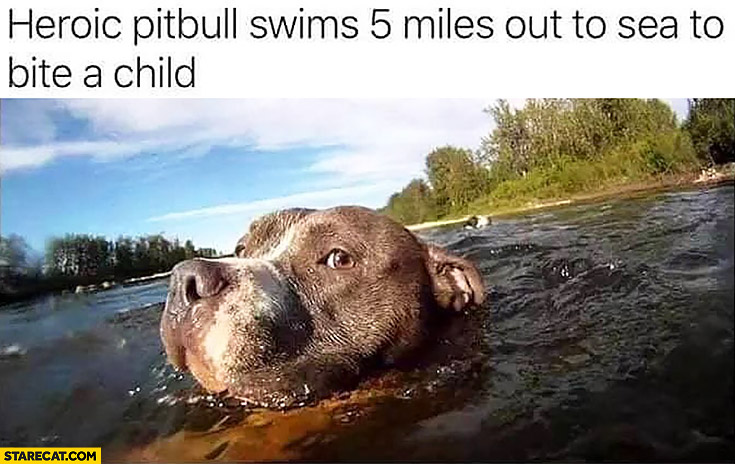 Heroic pitbull swims 5 miles out to the sea to bite a child