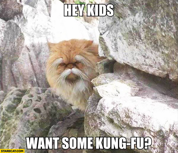 Hey kids want some kung-fu? Cat looking like kung-fu master