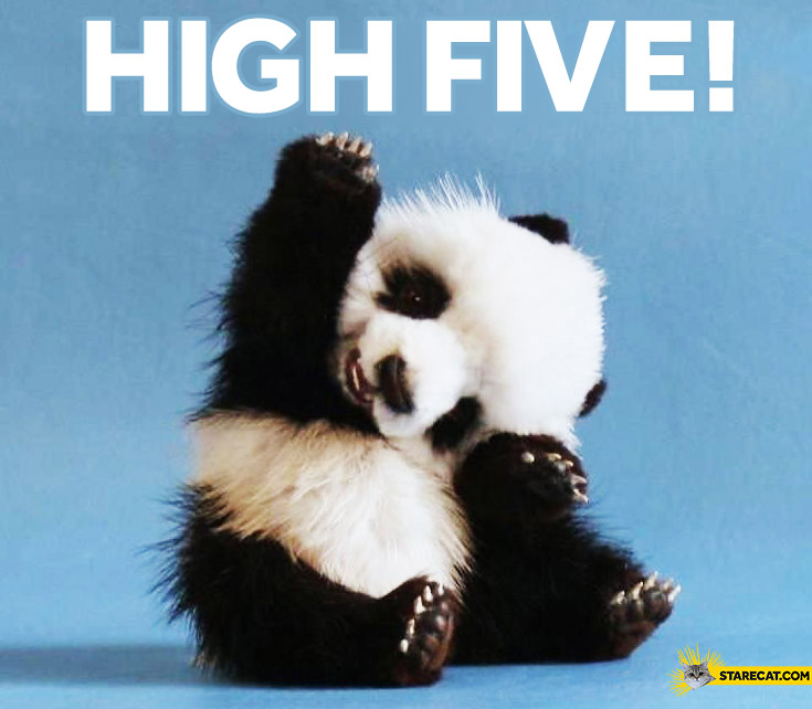 High five panda | StareCat.com
