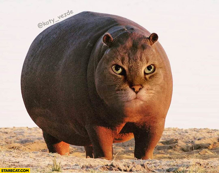 Hippo with cat face photoshopped