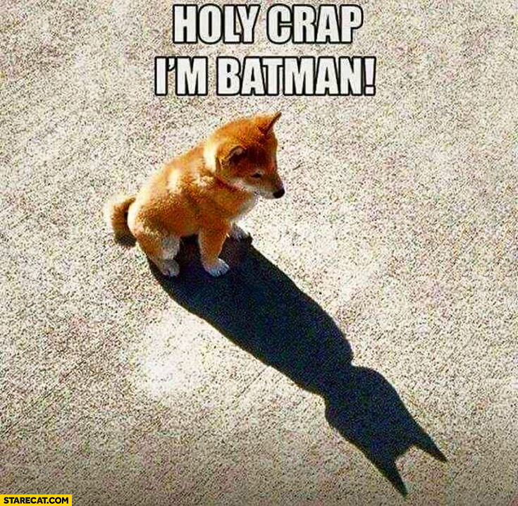 Holy crap I'm batman dog