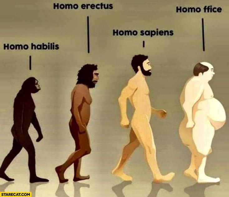 Homo habilis, homo erectus, homo sapiens, homo ffice fat man