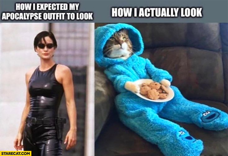 How I expected my apocalypse outfit to look vs how I actually look Trinity matrix cat in Cookie Monster suit