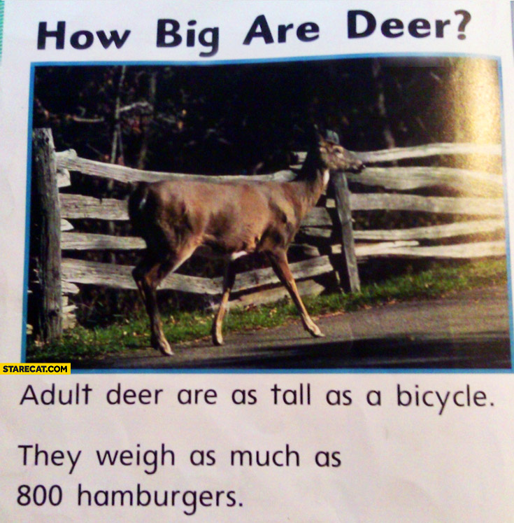 How big are deer? Adult deer are as tall as a bicycle they weigh as much as 800 hamburgers