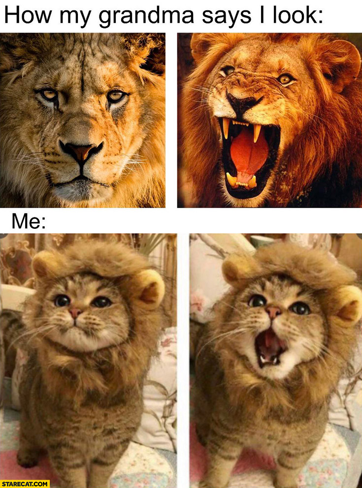 How my grandma says I look like lion, me actually a cat