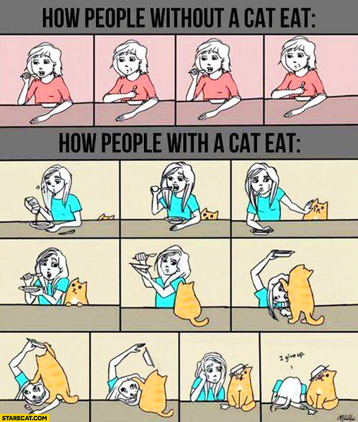 How people without a cat eat, how people with a cat eat comparison