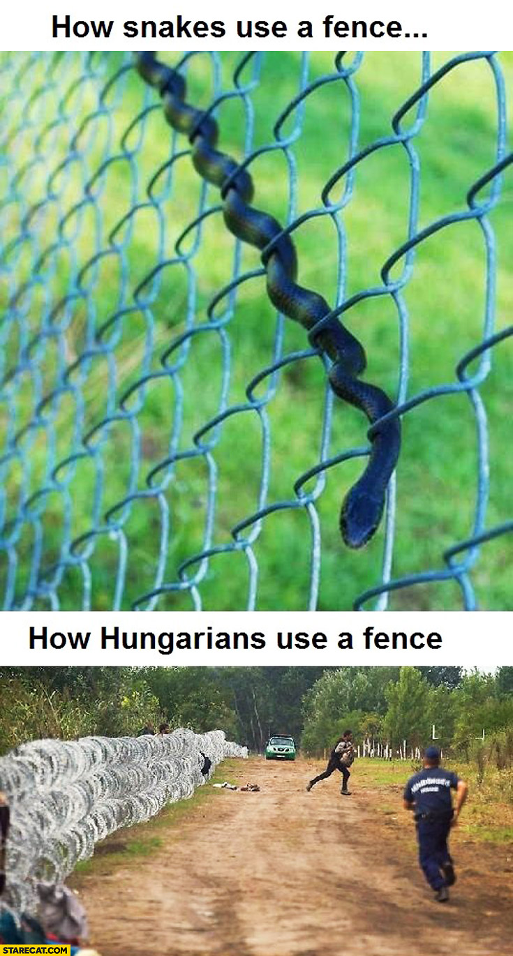 How snakes use a fence, how Hungarians use a fence illegal immigrants