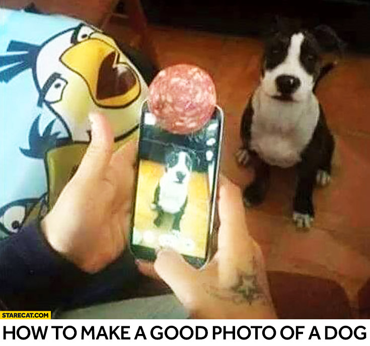 How to make a good photo of a dog? Tip trick with a salami meat
