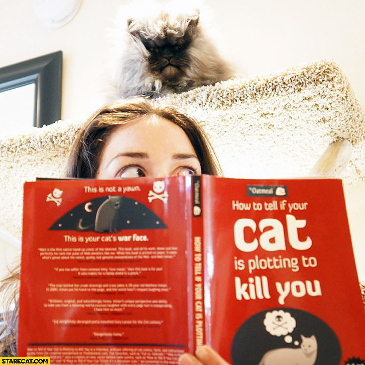How to tell if your cat is plotting to kill you staring cat