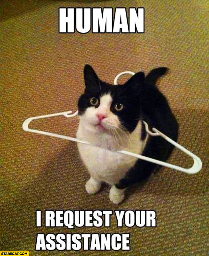 Human I request your assistance cat with hanger