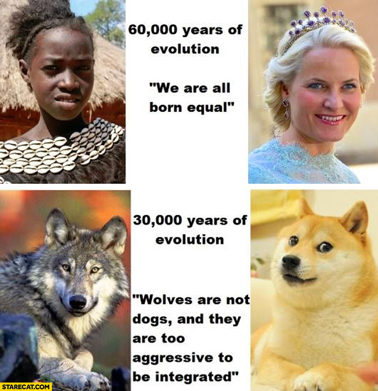 Humans 60 000 years of evolution we are all born equal dogs wolves 30 000 years of evolution they are too agressive to be integrated