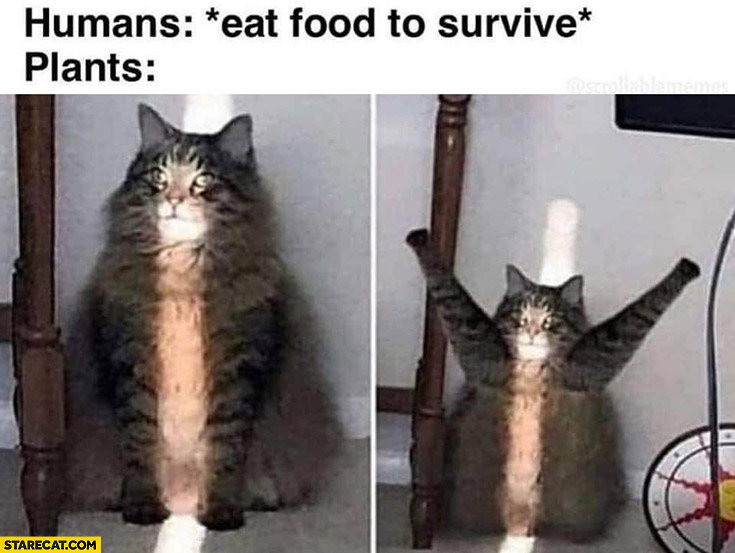 Humans eat food to survive, plants cat opens his arms at the sun