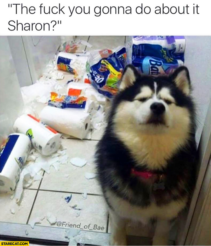 Husky dog ruined paper towels. What you gonna do about it Sharon?