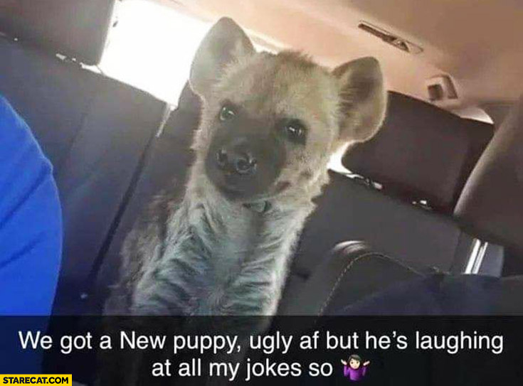 Hyena we got a new puppy, ugly but he's laughing at all my jokes