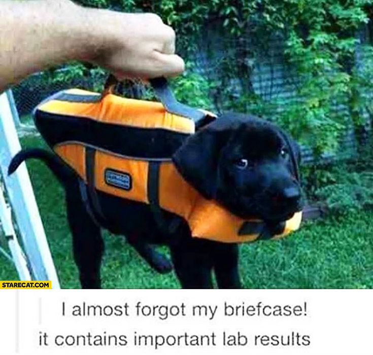 I almost forgot my briefcase it contains important lab results cute puppy