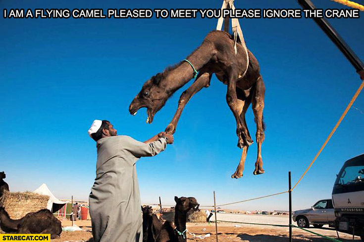 I am flying camel pleased to meet you please ignore the crane