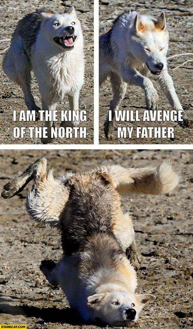 I am the king I will avenge my father dog fail