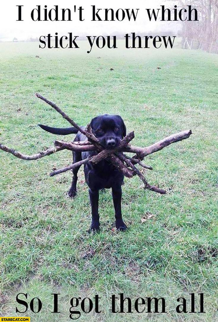 I didn't know which stick you threw so I got them all dog many sticks
