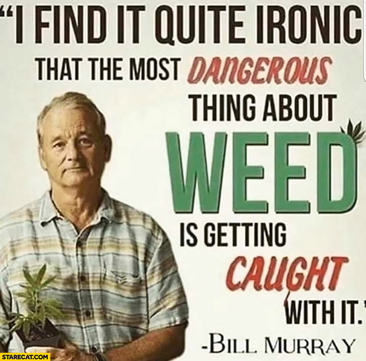 I find it quite ironic that the most dangerous thing about weed is getting caught with it Bill Murray quote