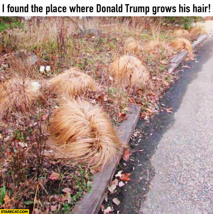 I found the place where Donald Trump grows his hair